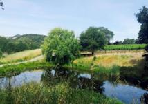 Sediment pond copy