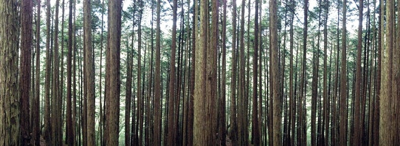 Lost in a forest sml