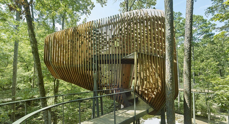10 modus studio garvan tree house 0428