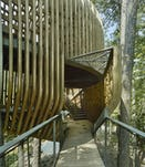 11 modus studio garvan tree house 0771