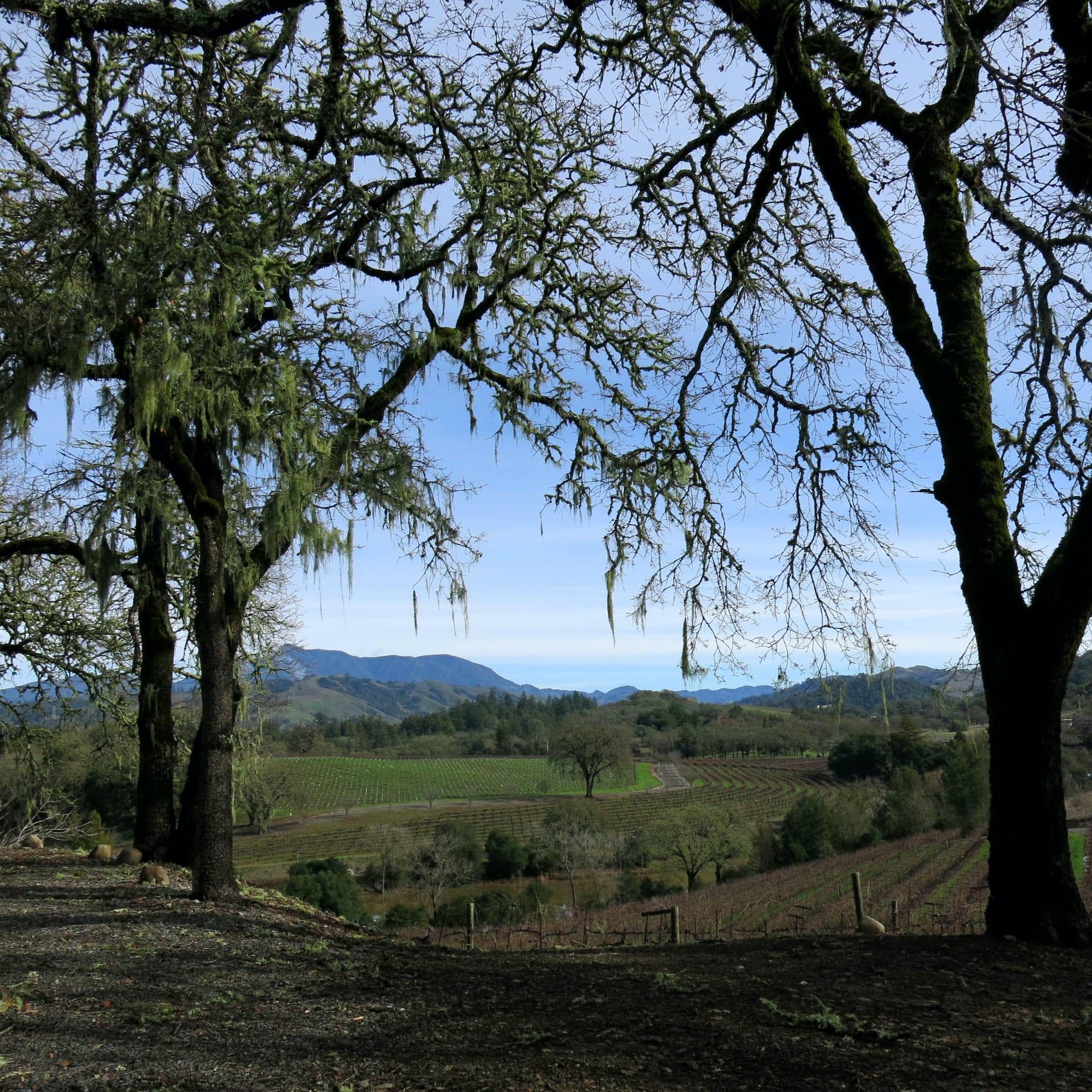 View w