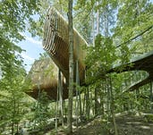 06 modus studio garvan tree house 0434