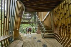 13 modus studio garvan tree house 0053