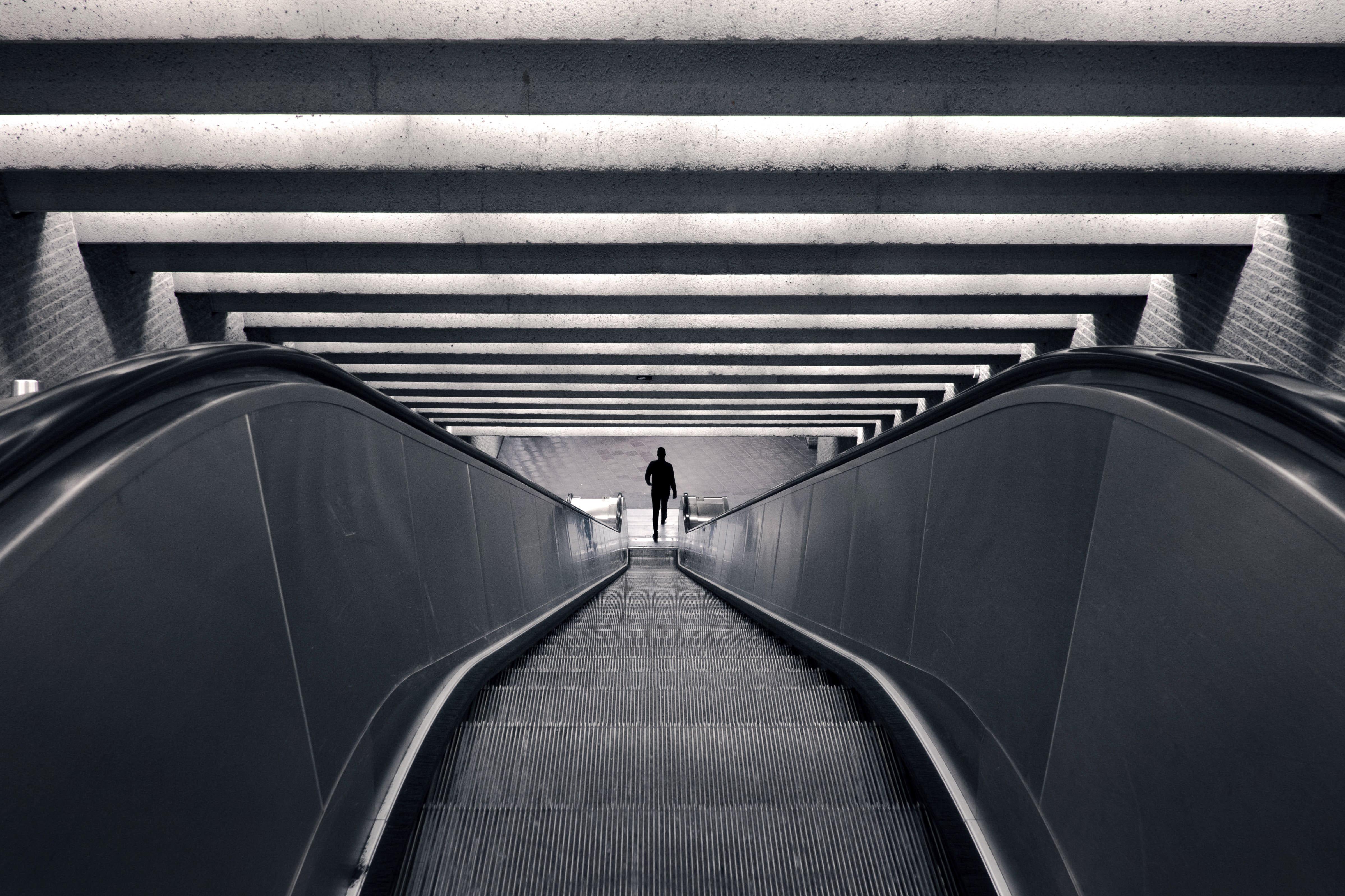 Zebra escalator verne ho