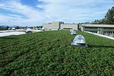Korematsu middle school gym green roof installation in progress