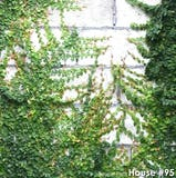 Modern farmhouse petoskey michigan architecture ivy
