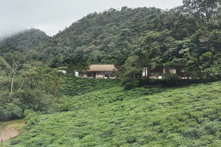 Tea cliff villa holiday home bulathsinhala sri lanka 01